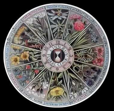 Linnaean-clock1