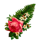 fernrose